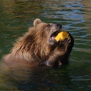 181029 Oakland Zoo-00132