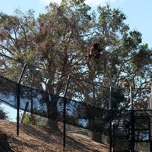 181029 Oakland Zoo-00086