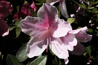 190410_FresJapaneseGardn-00021