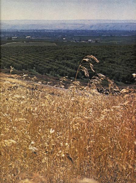 Owego - 1975--113