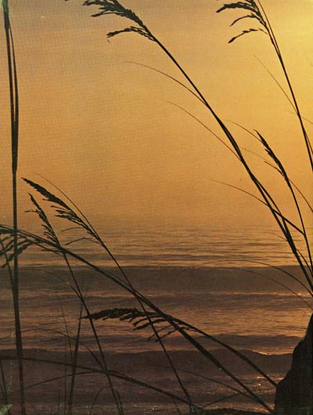 Owego - 1979-109