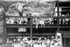 1968 Portsea Carnival 9 - by Ray Marsh