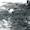 August 1968 - Hoppy