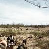 Hichory/Colgate 1 south of DMZ