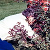Lois Potter gardening