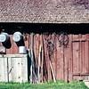 Grandad's Shed, Prairie City, OR, May 1973