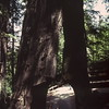K and S in a redwood tree, Northern California, June 1978
