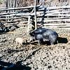Turkey Run Farm, VA