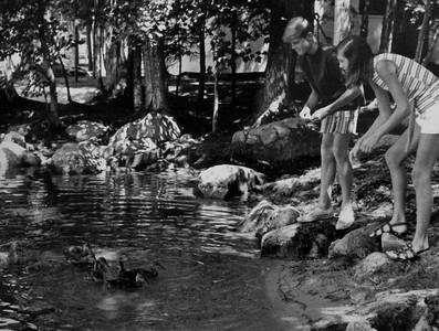 Feeding the ducks, 1971