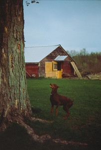 Alan's Farmhouse