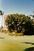 1989 Hawaii Vacation16
