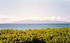 1989 Hawaii Vacation18