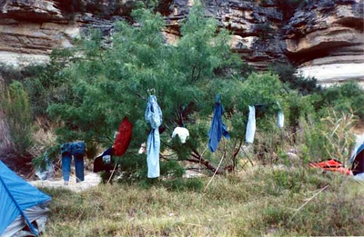 THE DRYING TREE
