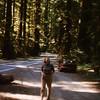 La in Redwood Natl Forest