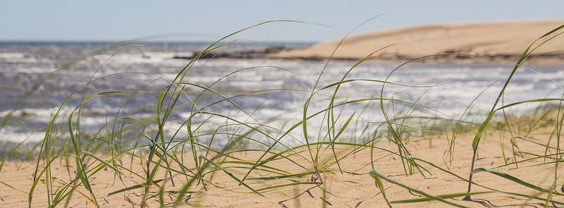 Hierbas en las dunas