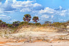 Jekyll Island Beach Landscape