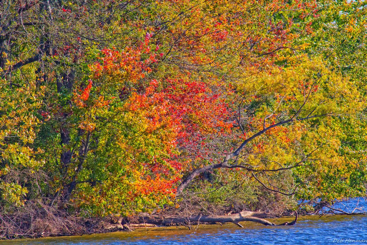 Fall N Trees