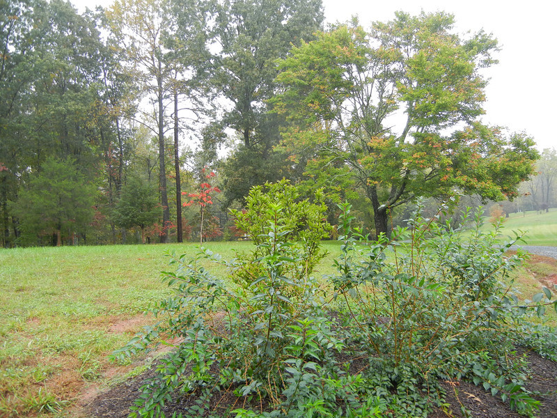 This view is the land that was once farmed by the Lewis family as part of the Locust Hill plantation.  During his teenage years Meriwether Lewis returned to the family property to manage the farming operation.  After this farming venture Meriwether decided to join the Army for adventure and eventually was hired by a family friend, President Thomas Jefferson, in 1802 to become President Jefferson private secretary during his Presidency.