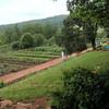 Monticello vegetable garden as it looks today.