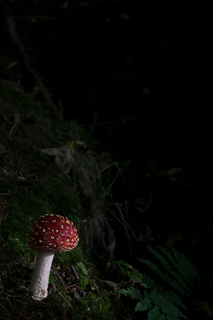In a corner of the dark woods...