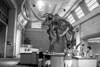 IMG_6618 bw d m mammoth