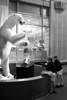 IMG_6615 bw d m polar bear