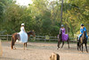_MG_0119 sandi caroline horse blur