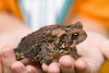 IMG_7642 _toad