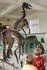 IMG_4373 cv dinosaur bones