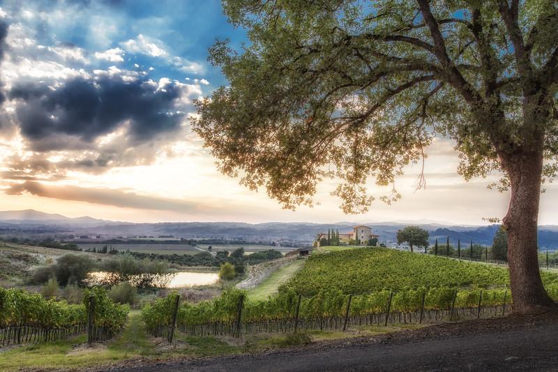 Montalcino Vineyards