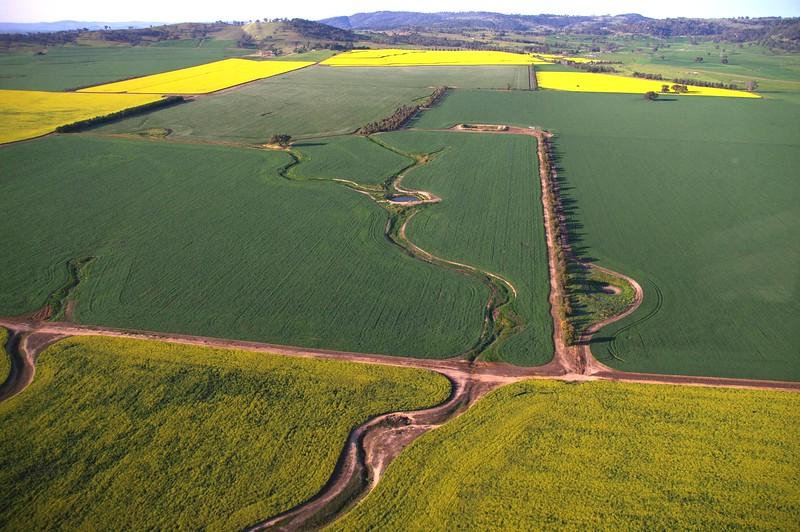 Beautiful canola fields