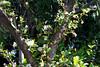 find hummingbird 2