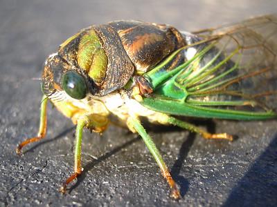 2000-01-Bugs