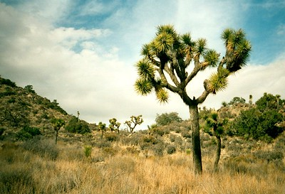 2000-02-Joshua-Tree