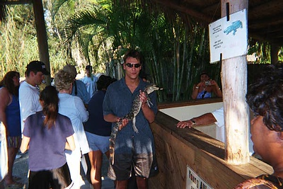 steve parak - Steve is smiling because the baby alligator is peeing !  you can see it in the picture.