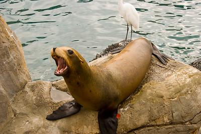SeaWorldDay5-48