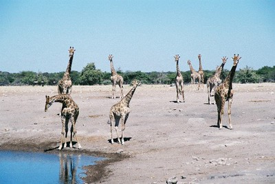 2001 Namibia