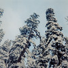12 Snow, Trees & Sky