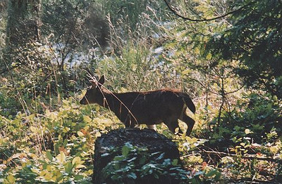 2001 Hatley Castle 8K - A curious observer