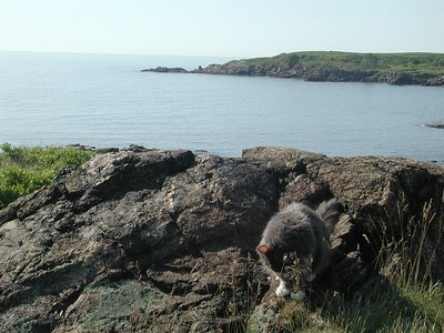 Creature on the rocks in Nahant, June 2002