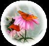 julia-butterfly