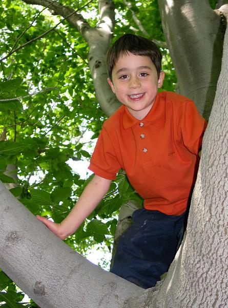 Benjamin in a big beech tree