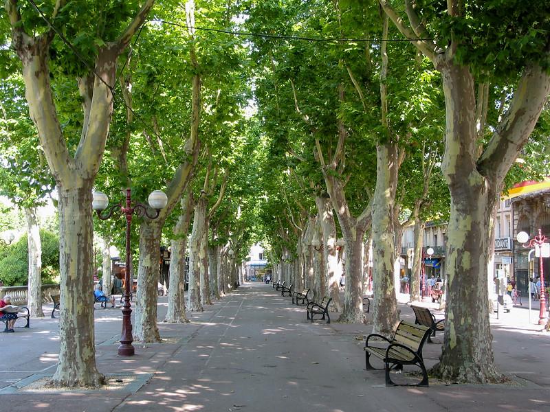 Promenade des Barques, plane trees