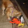 Abby with her Hokie 2.JPG  Cropped