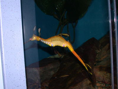 another weird seahorse