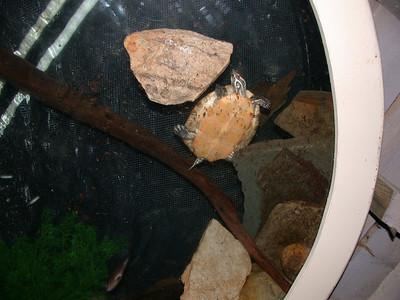 turtle from below