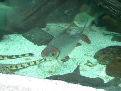 bigfish 2