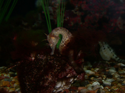 hidden seahorse
