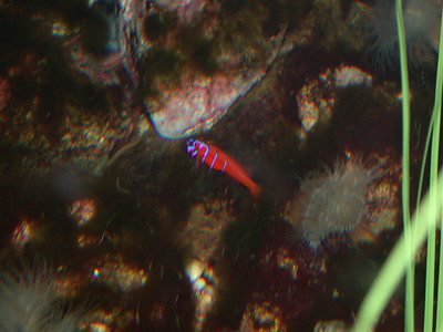 brightfish