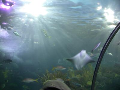 at the new orleans aquarium